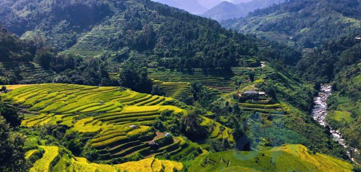 Cánh đồng lúa trên Bản Phùng