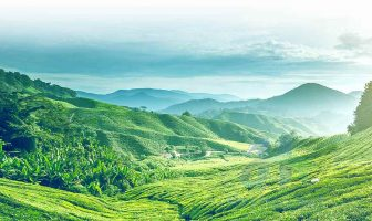 Green Tea Hill - Vietnam