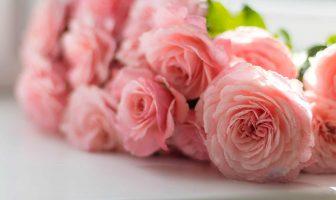 Hoa cho ngày Tình yêu - ý nghĩa các loài hoa