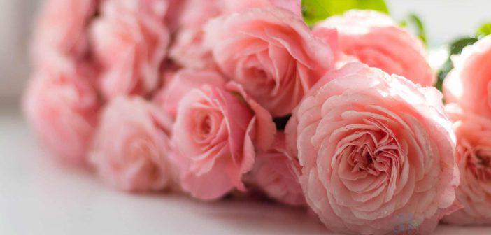 Tên và ý nghĩa các loài hoa trong tình yêu