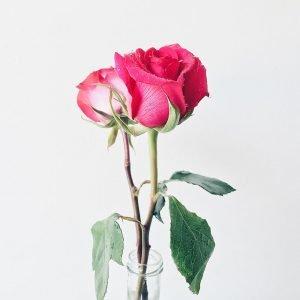 Ý nghĩa các loài hoa hồng