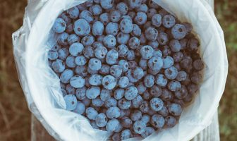 Blueberries appear to have significant benefits for people with high blood pressure