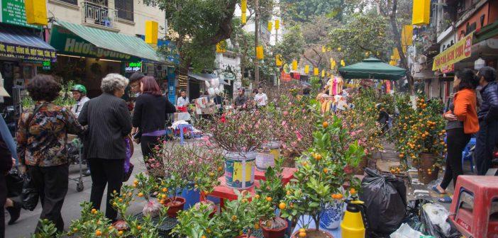Small kumquat trees are popular on Vietnamese New Year