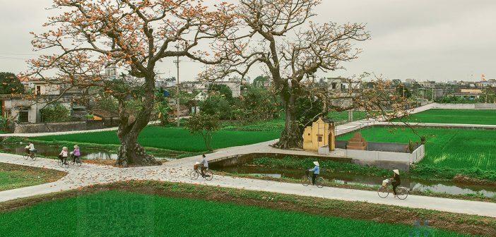 Vẫn là cây đa cây gạo nhưng đường làng được bê tông hóa