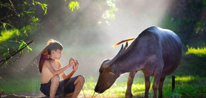 """Cây sáo và con trâu là hình ảnh quen thuộc trong tranh """"Chăn Trâu Thổi Sáo"""""""