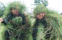 When the trees start speaking Vietnamese
