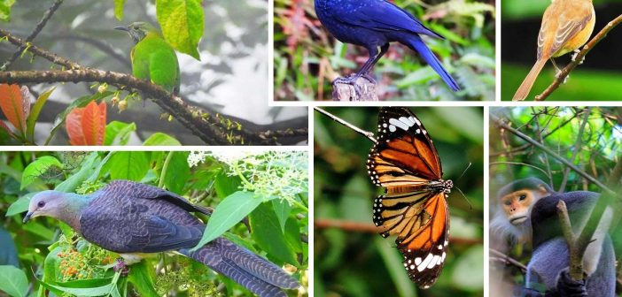 Bach Ma also 256 species of butterflies and many species of reptiles, amphibians, fish and insects